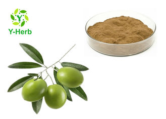 Olive Leaf Extract Natural Cosmetic Ingredients  Hydroxytyrosol  Oleuropein Powder