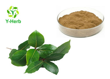 100% Natural Supplement Food Grade Bay Leaves Powder Laurus Nobilis Leaf Extract